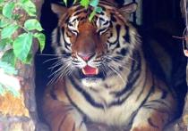 Московский зоопарк приготовил хищного эмигранта для коллег из Денвера