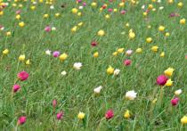 Второй фестиваль тюльпанов под Саратовом пройдёт 22 и 23 апреля