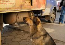 Верховный суд РФ приговорил всех бездомных животных к смертной казни?