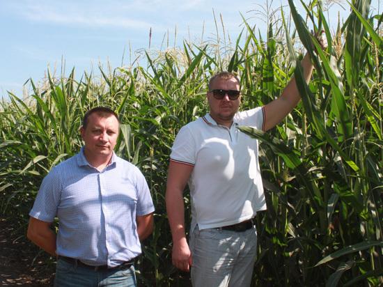 На полях вольского сельхозпредприятия «Элита-С» введены новые участки орошения